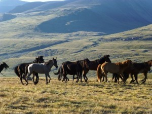 Einige unserer 18 Pferde