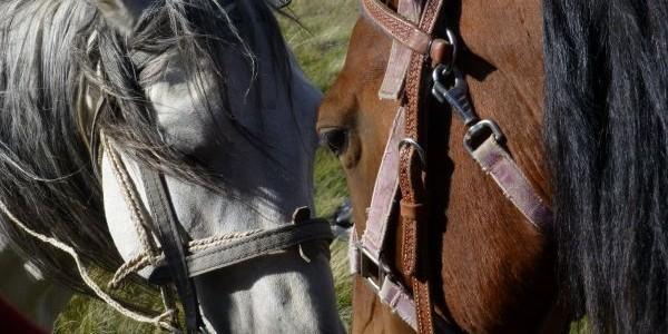 Pferdetrekking in Kirgistan – Pferde und Ausrüstung