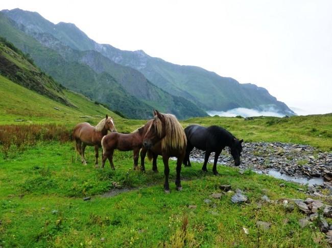 Comtois- und Mérens-Pferde über dem Val d'Estours