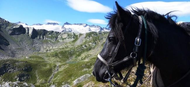 Wanderritt in den Pyrenäen